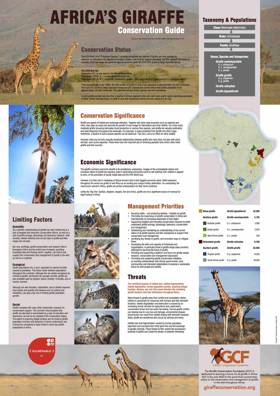 Poster: Africa's Giraffe – Conservation Guide