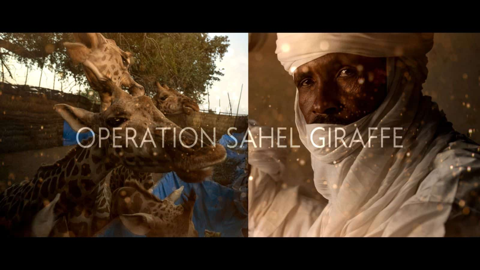 Short Film: Operation Sahel Giraffe